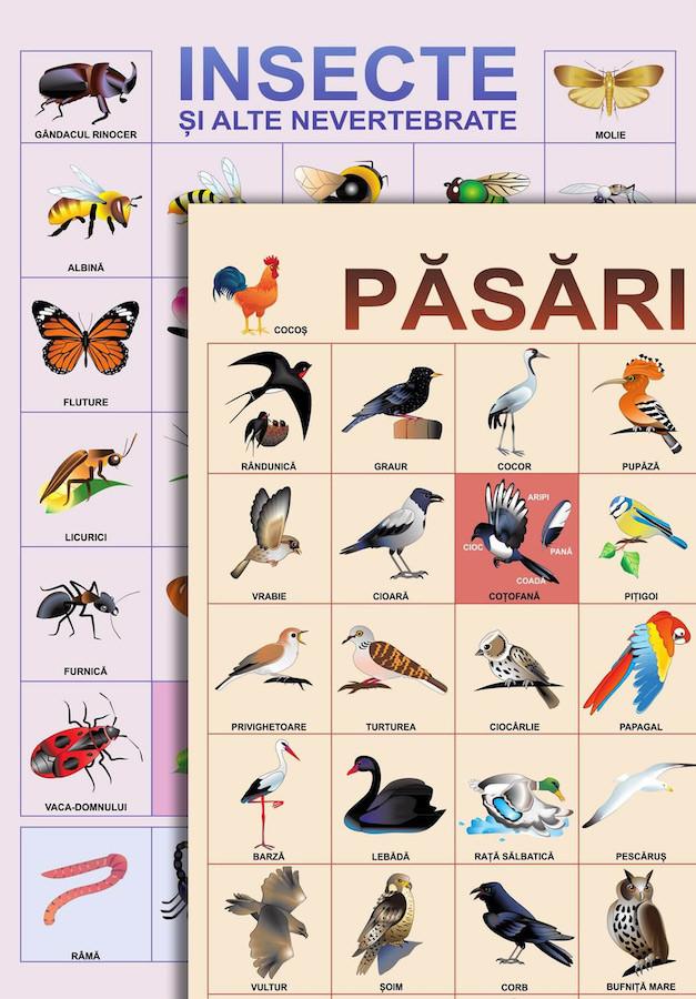 Planşă. Păsări. Insecte şi alte nevertebrate